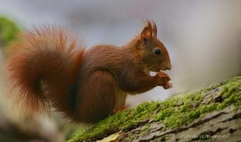 écureuil novembre